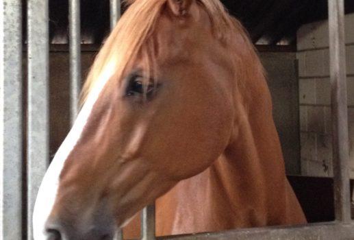 Hoe mijn paard het bewijs leverde