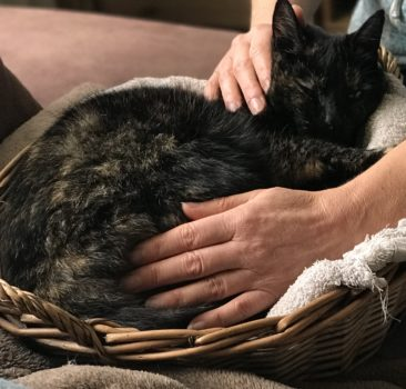 Sterk staaltje kattenwijsheid